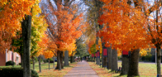 blog banner campus with fall foliage